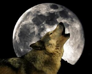 The Wolf Moon... Luna Lupa