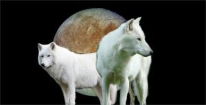 icewolves1