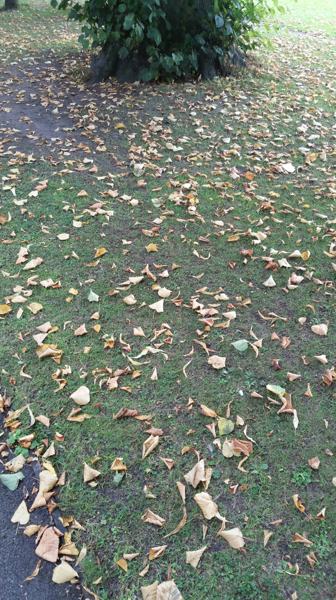 autumns-here