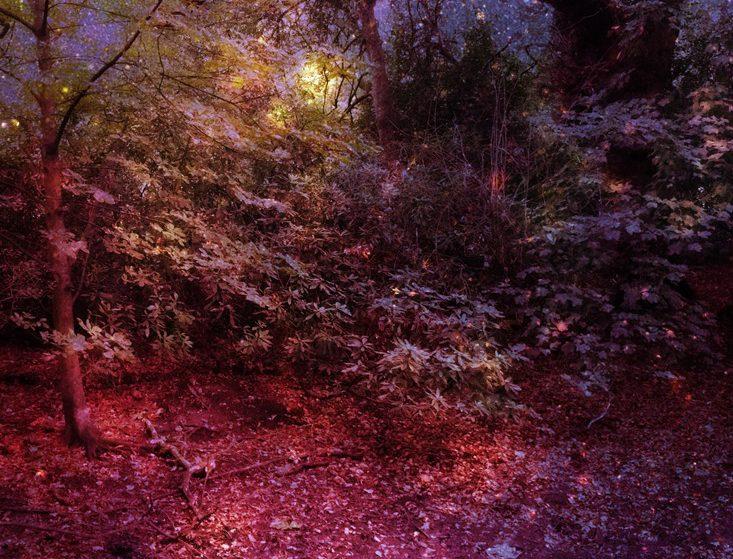 serene_-garden.jpg
